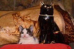 Kätzchen des grauen Weiß, das auf einem roten Kissen mit einer Statue der schwarzen Katze sitzt stockfotografie