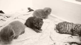 Kätzchen, die auf dem Tuch sitzen stock video footage
