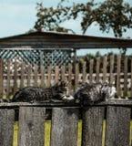 Kätzchen, die auf dem Zaun spielen Stockfotografie