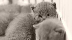 Kätzchen, die auf hölzernem Hintergrund, weißer Zaun schlafen stock video