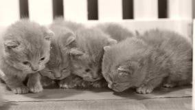 Kätzchen, die auf hölzernem Hintergrund, weißer Zaun schlafen stock video footage
