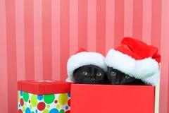 Kätzchen, die aus einem Weihnachtsgeschenk heraus trägt Sankt-Hüte emporragen lizenzfreie stockfotografie