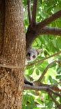 Kätzchen, die Bäume klettern Stockbilder