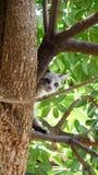 Kätzchen, die Bäume klettern Stockfoto
