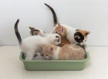 Kätzchen, die in der Katzentoilette sitzen Lizenzfreie Stockbilder