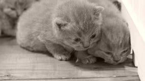 Kätzchen, die hölzernen Hintergrund, weißen Zaun weitergehen stock video