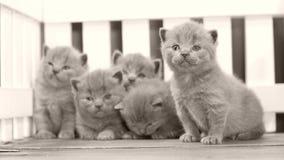 Kätzchen, die hölzernen Hintergrund, weißen Zaun weitergehen stock video footage