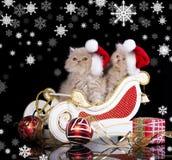 Kätzchen, die roten Weihnachten-Sankt-Hut tragen Stockbild