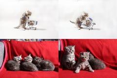 Kätzchen, die von einem Warenkorb, Schirm des Gitters 2x2 essen Stockfotos
