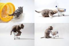 Kätzchen, die von einem Warenkorb, Schirm des Gitters 2x2 essen Lizenzfreie Stockfotografie