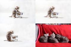 Kätzchen, die von einem Warenkorb, Schirm des Gitters 2x2 essen Lizenzfreies Stockfoto