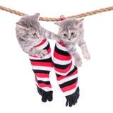Kätzchen, die waschende Linie hängen stockbild
