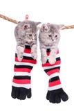 Kätzchen, die waschende Linie hängen stockfoto