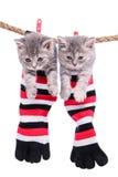 Kätzchen, die waschende Linie hängen lizenzfreie stockfotografie