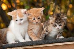 Kätzchen drei Lizenzfreies Stockbild