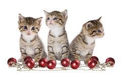 Kätzchen drei auf weißem Hintergrund Stockfotografie