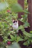 Kätzchen durch das Tor Lizenzfreies Stockfoto