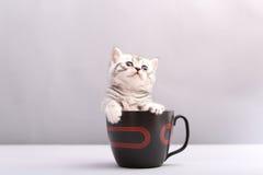 Kätzchen in einem Becher lizenzfreie stockfotografie