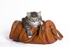 Kätzchen in einem Beutel Stockfotos