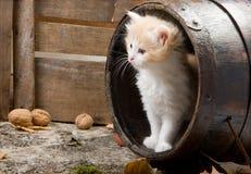Kätzchen in einem Faß Lizenzfreies Stockfoto