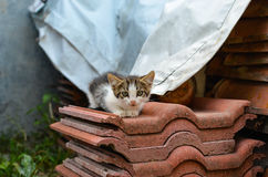 Kätzchen in einem Garten Lizenzfreie Stockfotografie