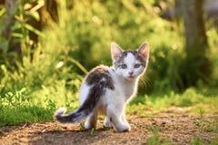 Kätzchen in einem Gras Stockfoto