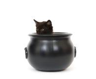Kätzchen in einem großen Kessel Stockfotografie