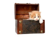 Kätzchen in einem Kasten Stockbilder