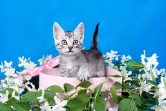 Kätzchen in einem Kasten in den Blumen Lizenzfreies Stockbild