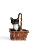 Kätzchen in einem Korb Lizenzfreies Stockfoto