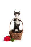 Kätzchen in einem Korb Stockbild