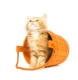 Kätzchen in einem orange Faß Lizenzfreie Stockfotos