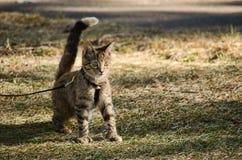 Kätzchen in einem Park Stockbild