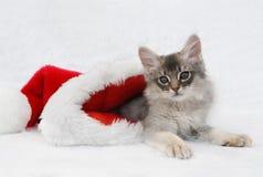 Kätzchen in einem Sankt-Hut Stockfotos