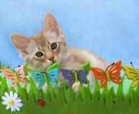 Kätzchen in einem vortäuschengarten Stockfoto