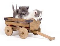 Kätzchen in einem Wagen Stockbilder