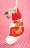 Kätzchen in einem Weihnachtsstrumpf Lizenzfreie Stockfotos
