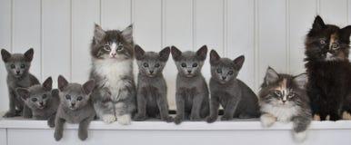 Kätzchen in einer Linie Lizenzfreies Stockfoto