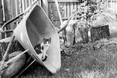 Kätzchen in einer Schubkarre Stockfotografie