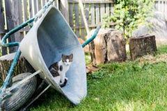 Kätzchen in einer Schubkarre Lizenzfreies Stockbild
