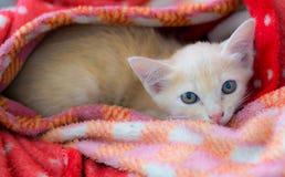 Kätzchen entzückend auf der Decke stockfoto