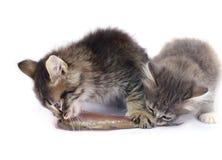 Kätzchen essen Fische Lizenzfreie Stockfotos