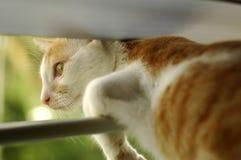 Kätzchen am Fenster Lizenzfreies Stockfoto