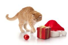 Kätzchen, Geschenkkasten und Kopfschmuck von Weihnachtsmann. Lizenzfreies Stockfoto