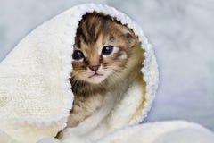 Kätzchen geschlossen im Tuch Lizenzfreies Stockfoto