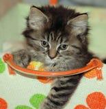 Kätzchen in gesponnenem Korb Stockfotografie