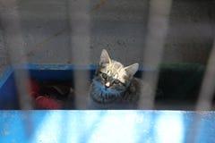 Kätzchen herein in der Einschließung Lizenzfreie Stockfotos