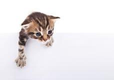 Kätzchen hinter weißem signboar Lizenzfreie Stockfotos