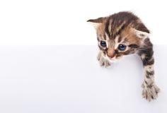 Kätzchen hinter weißem signboar Lizenzfreie Stockfotografie
