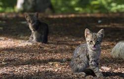 Kätzchen im Freien lizenzfreie stockfotografie
